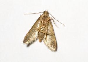 Huiles essentielles contre les mites sont shiatsu71 - Huiles essentielles contre mites ...